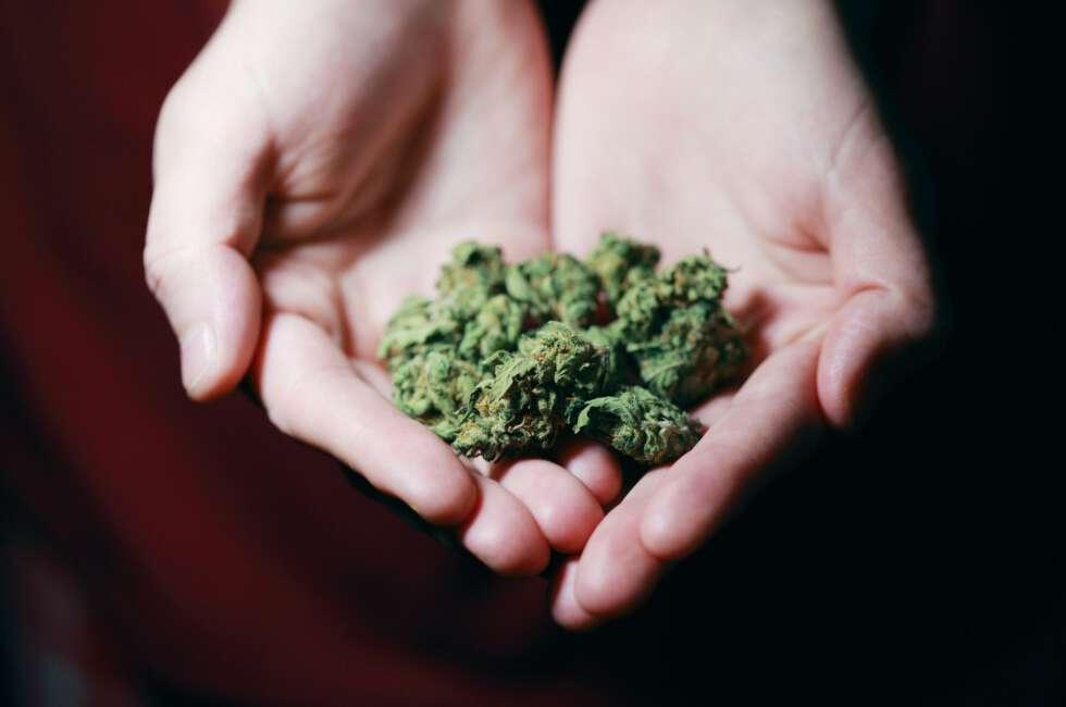 Konopie, marihuana, CBD, THC – czyli ziołowe ABC